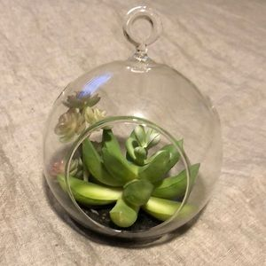 4 for $12//Faux succulent glass terrarium